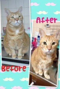肥満猫のダイエットの秘訣【食べ過ぎる猫には意外な事実が】